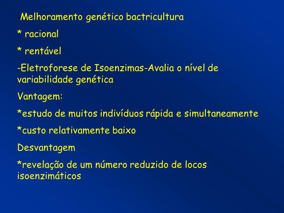 - Melhoramento genético bactricultura * racional * rentável -Eletroforese de Isoenzimas-Avalia o nível de variabilidade genética Vantagem: *estudo de