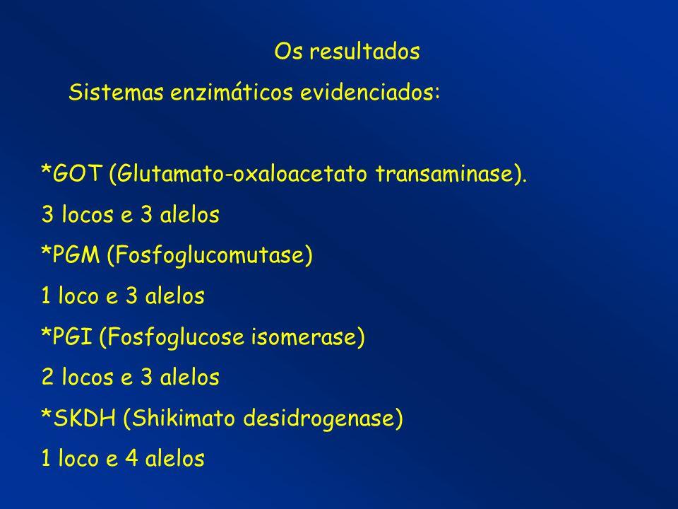 Os resultados Sistemas enzimáticos evidenciados: *GOT (Glutamato-oxaloacetato transaminase). 3 locos e 3 alelos *PGM (Fosfoglucomutase) 1 loco e 3 ale