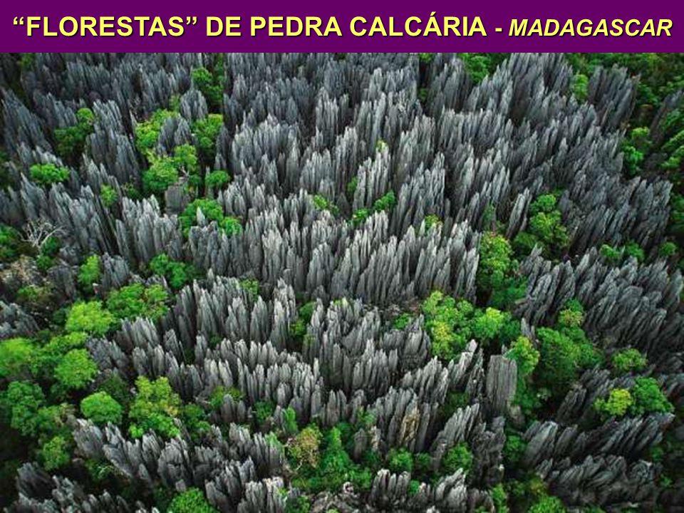 FLORESTAS DE PEDRA CALCÁRIA - MADAGASCAR FLORESTAS DE PEDRA CALCÁRIA - MADAGASCAR ÁREA PROTEGIDA- 1550 km² - ELEVAÇÕES DE ATÉ 120 m LÊMURES DESFILADEIRODESFILADEIRO