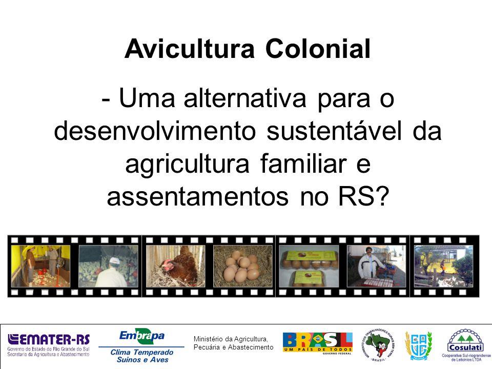 Ministério da Agricultura, Pecuária e Abastecimento Avicultura Colonial - Uma alternativa para o desenvolvimento sustentável da agricultura familiar e assentamentos no RS?