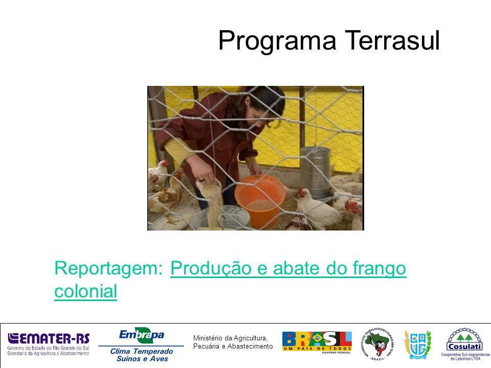 Ministério da Agricultura, Pecuária e Abastecimento Programa Terrasul Reportagem: Produção e abate do frango colonial
