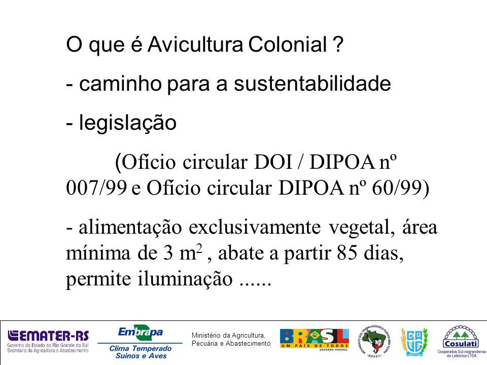 Ministério da Agricultura, Pecuária e Abastecimento O que é Avicultura Colonial .