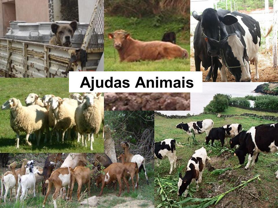 6 Ajudas Animais