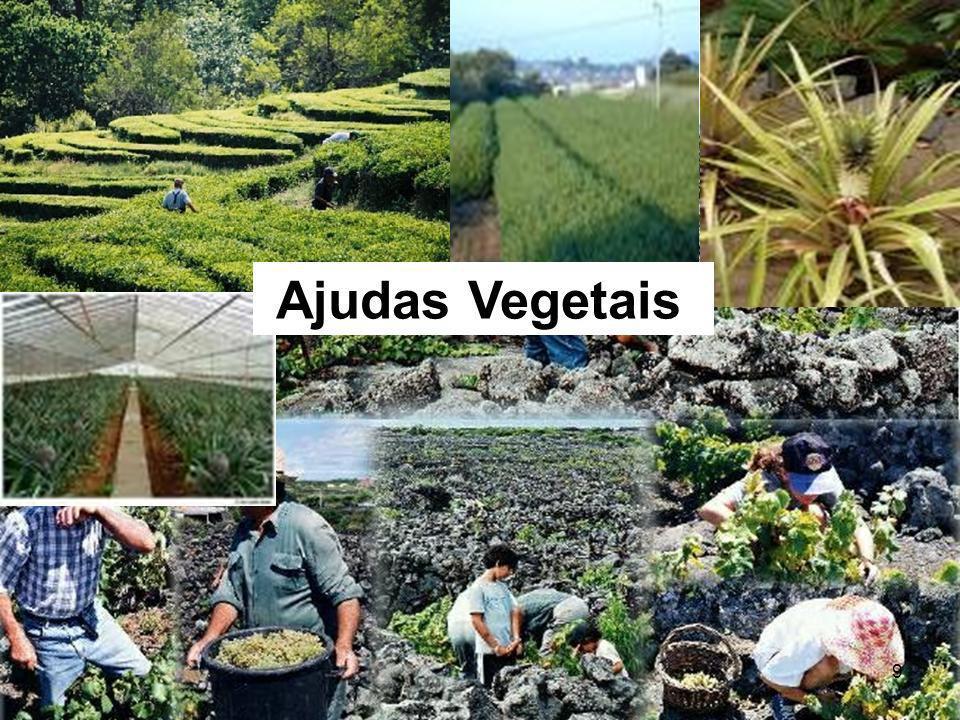 9 Ajudas Vegetais