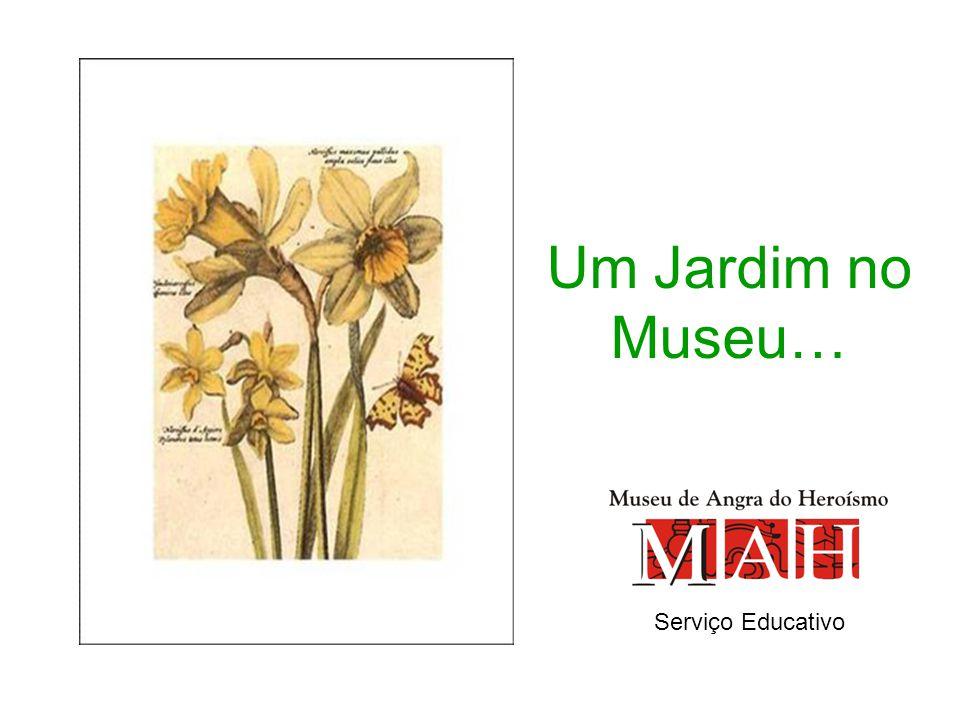 Um Jardim no Museu… Serviço Educativo