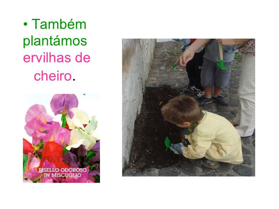 Também plantámos ervilhas de cheiro.