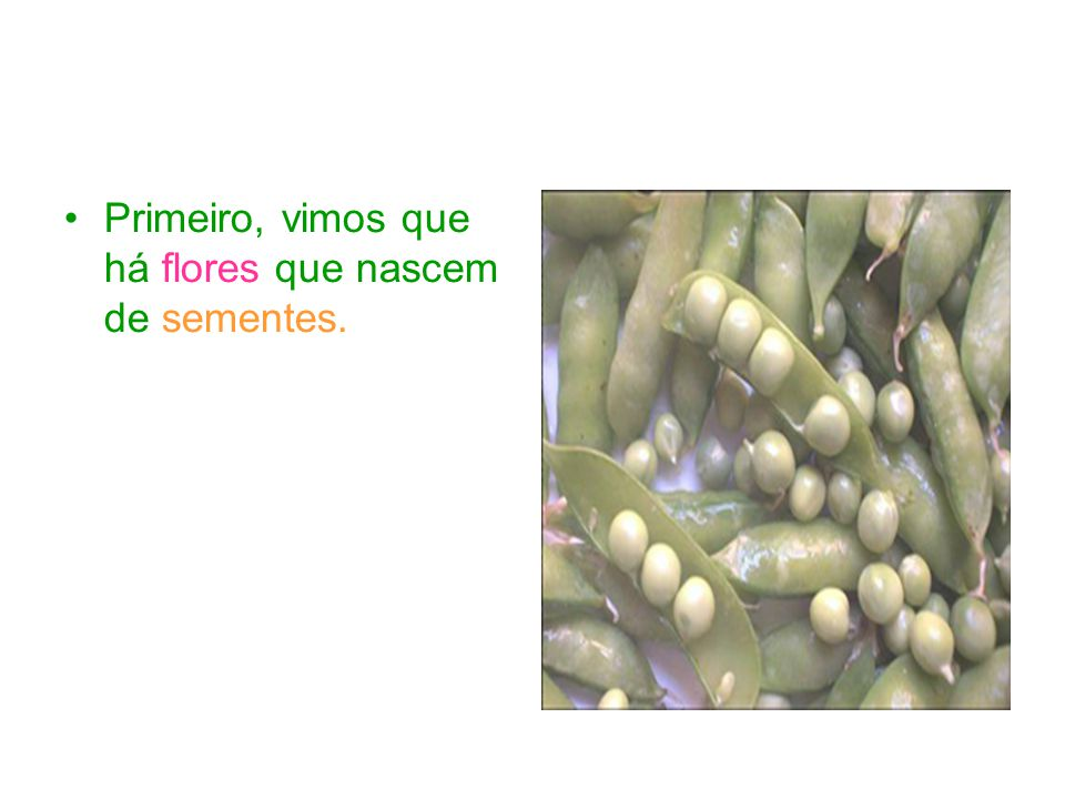 Primeiro, vimos que há flores que nascem de sementes.