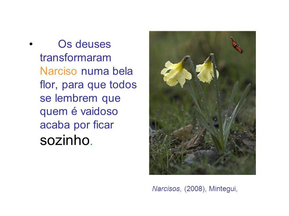 Os deuses transformaram Narciso numa bela flor, para que todos se lembrem que quem é vaidoso acaba por ficar sozinho.
