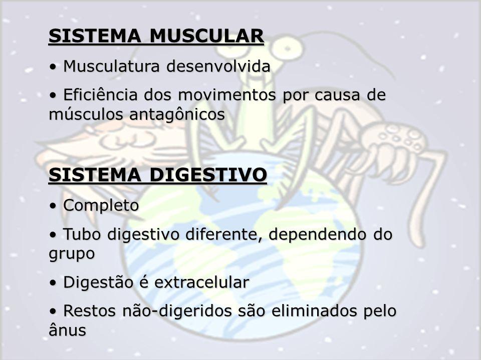SISTEMA MUSCULAR Musculatura desenvolvida Musculatura desenvolvida Eficiência dos movimentos por causa de músculos antagônicos Eficiência dos movimentos por causa de músculos antagônicos SISTEMA DIGESTIVO Completo Completo Tubo digestivo diferente, dependendo do grupo Tubo digestivo diferente, dependendo do grupo Digestão é extracelular Digestão é extracelular Restos não-digeridos são eliminados pelo ânus Restos não-digeridos são eliminados pelo ânus