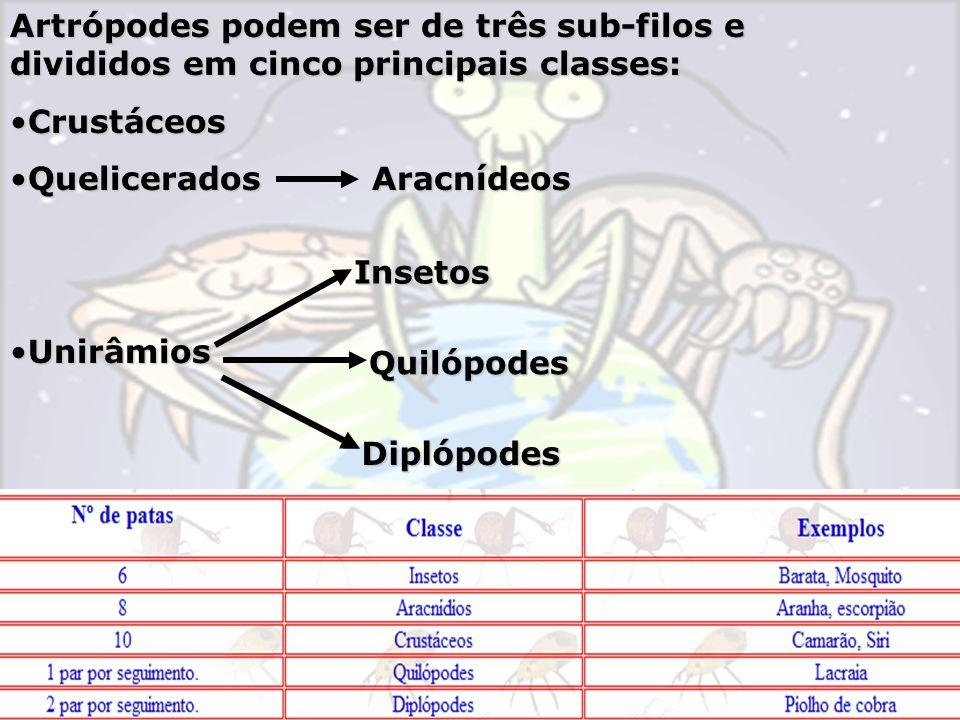 Artrópodes podem ser de três sub-filos e divididos em cinco principais classes: CrustáceosCrustáceos Quelicerados AracnídeosQuelicerados Aracnídeos UnirâmiosUnirâmiosInsetos Diplópodes Quilópodes