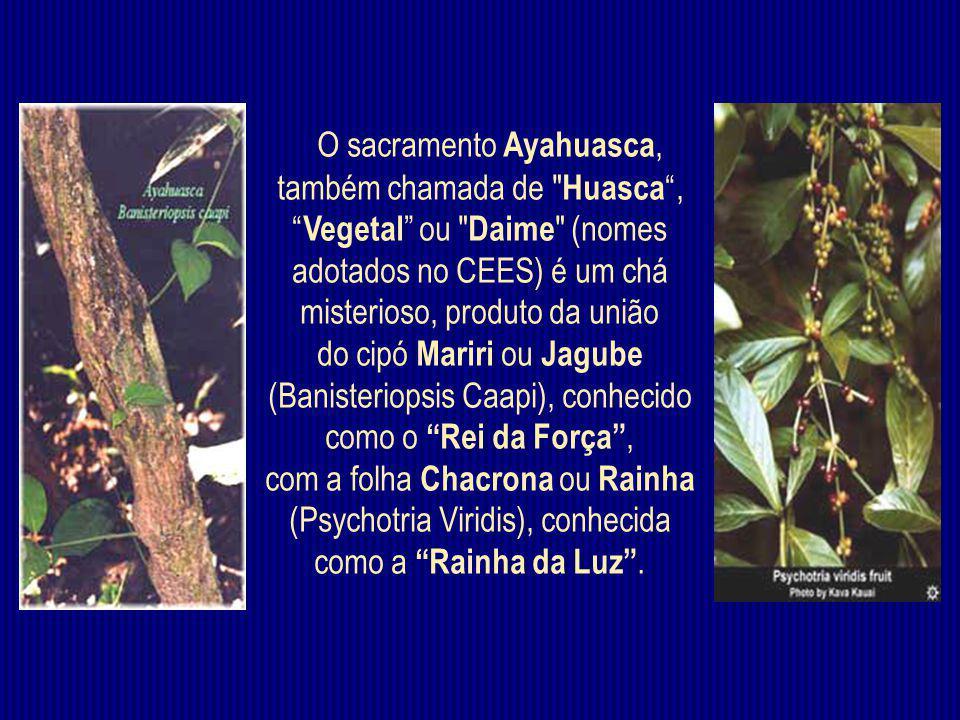 O sacramento Ayahuasca, também chamada de Huasca, Vegetal ou Daime (nomes adotados no CEES) é um chá misterioso, produto da união do cipó Mariri ou Jagube (Banisteriopsis Caapi), conhecido como o Rei da Força, com a folha Chacrona ou Rainha (Psychotria Viridis), conhecida como a Rainha da Luz.