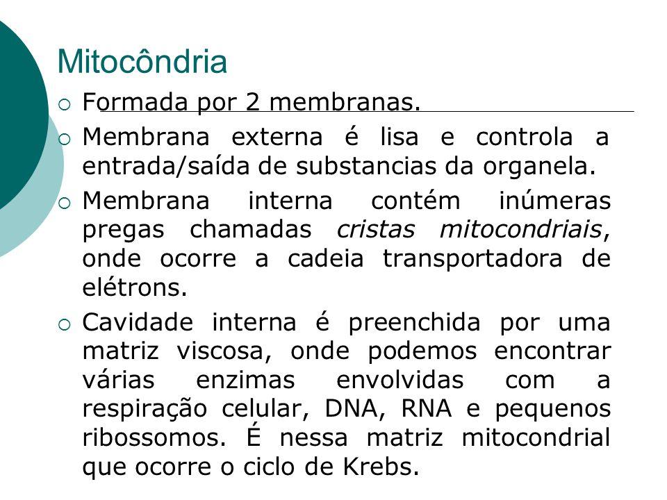 Mitocôndria Formada por 2 membranas. Membrana externa é lisa e controla a entrada/saída de substancias da organela. Membrana interna contém inúmeras p
