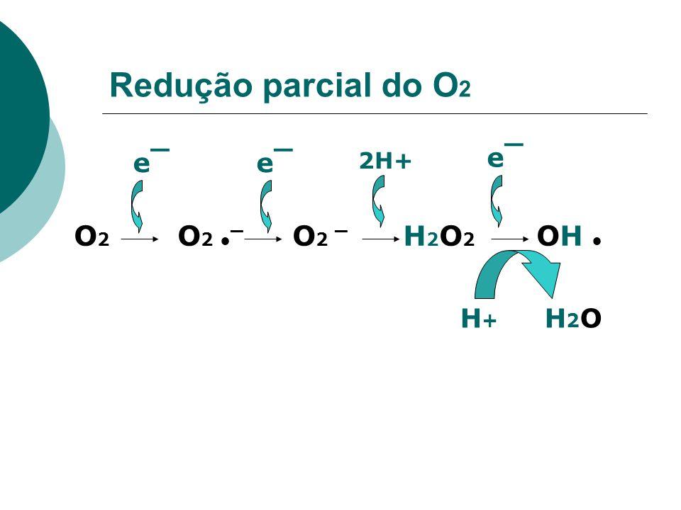 Redução parcial do O 2 O 2 O 2 ¯ O 2 ¯ H 2 O 2 OH e¯e¯e¯e¯ 2H+ e¯e¯ H + H 2 O