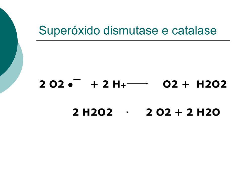 Superóxido dismutase e catalase 2 O2 ¯ + 2 H + O2 + H2O2 2 H2O2 2 O2 + 2 H2O