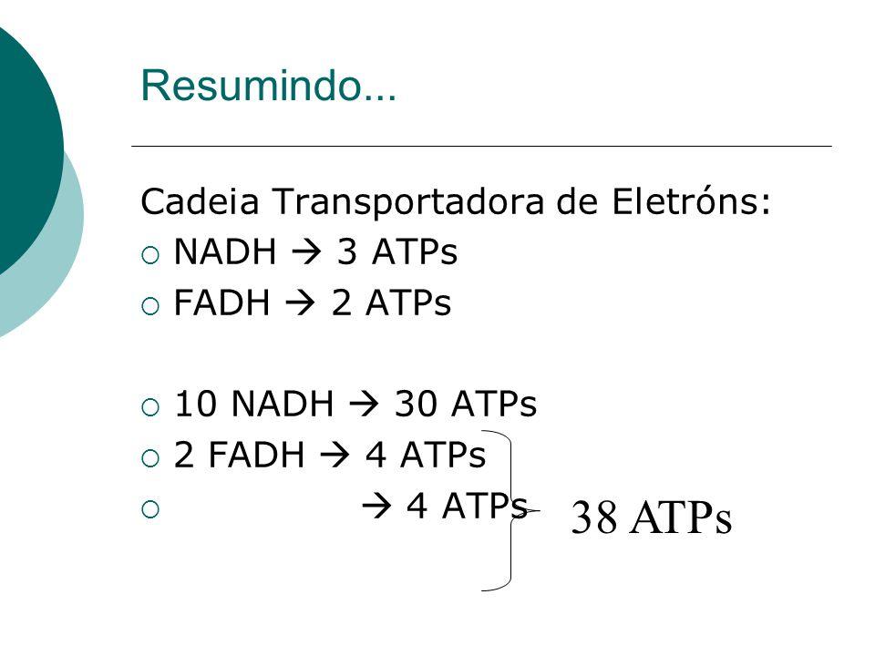 Cadeia Transportadora de Eletróns: NADH 3 ATPs FADH 2 ATPs 10 NADH 30 ATPs 2 FADH 4 ATPs 4 ATPs Resumindo... 38 ATPs