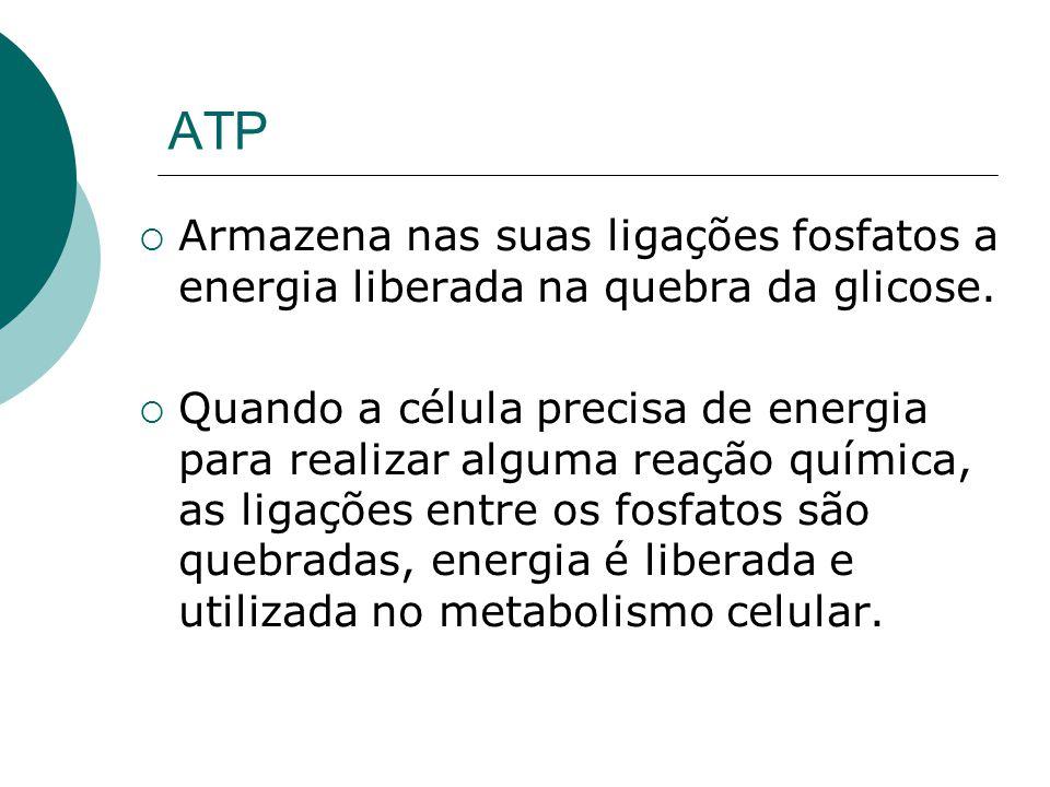 ATP Armazena nas suas ligações fosfatos a energia liberada na quebra da glicose. Quando a célula precisa de energia para realizar alguma reação químic