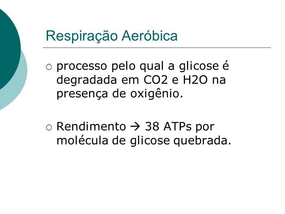 Respiração Aeróbica processo pelo qual a glicose é degradada em CO2 e H2O na presença de oxigênio. Rendimento 38 ATPs por molécula de glicose quebrada