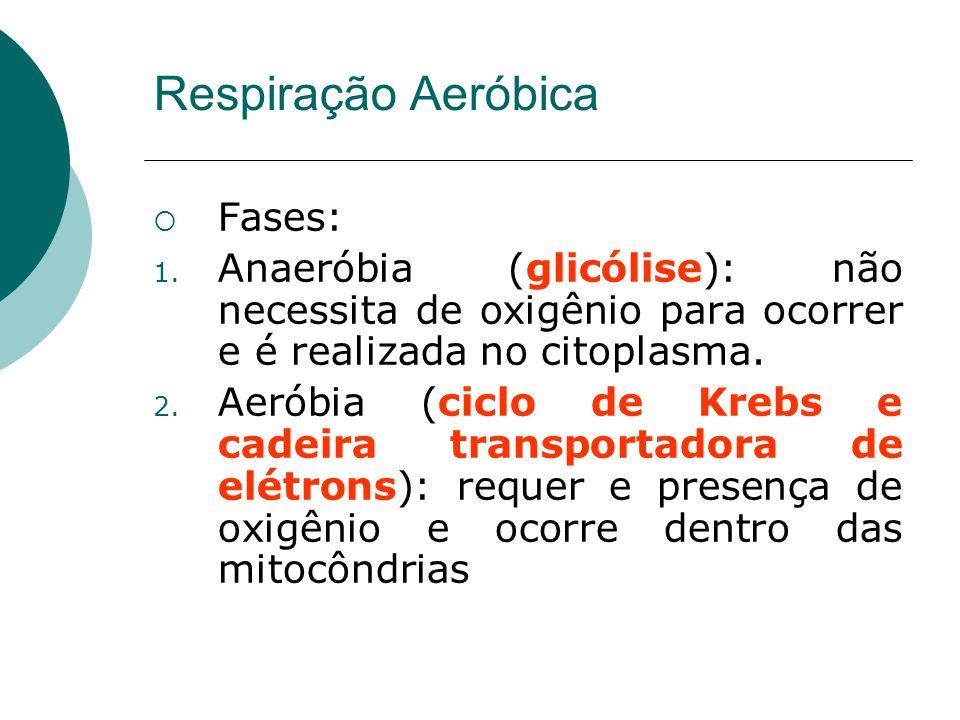 Fases: 1. Anaeróbia (glicólise): não necessita de oxigênio para ocorrer e é realizada no citoplasma. 2. Aeróbia (ciclo de Krebs e cadeira transportado
