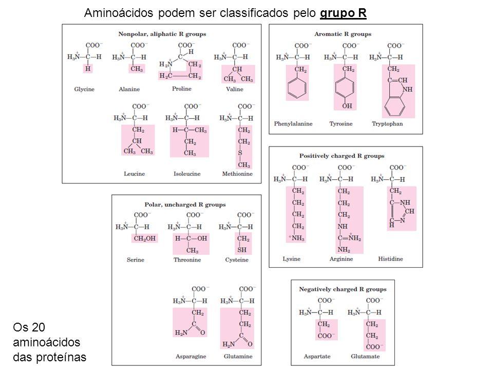 Aminoácidos podem ser classificados pelo grupo R Os 20 aminoácidos das proteínas