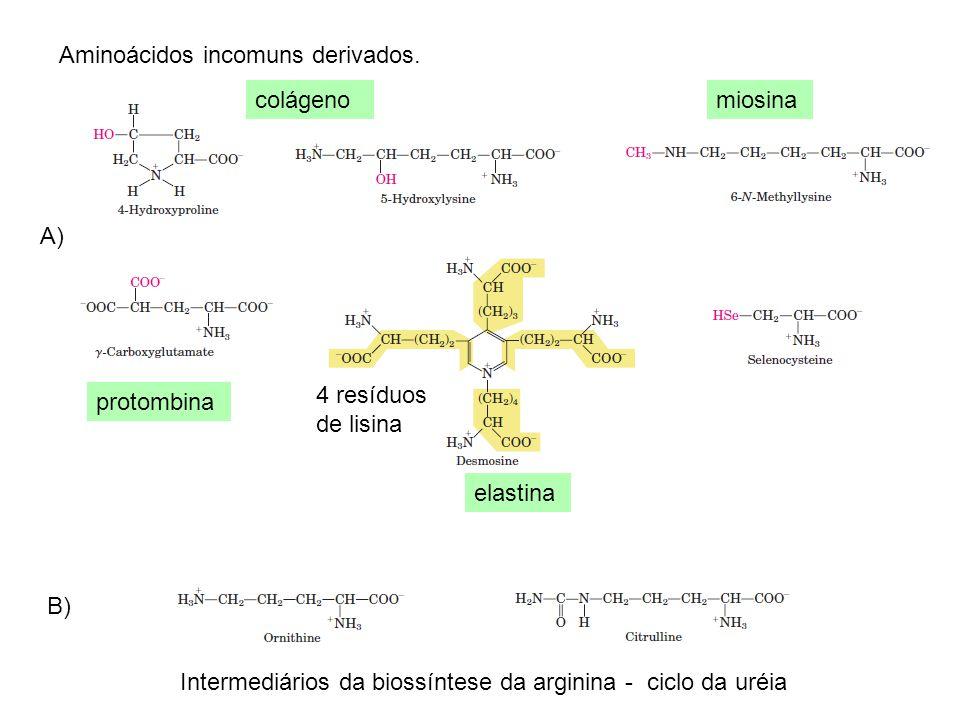 Aminoácidos incomuns derivados.
