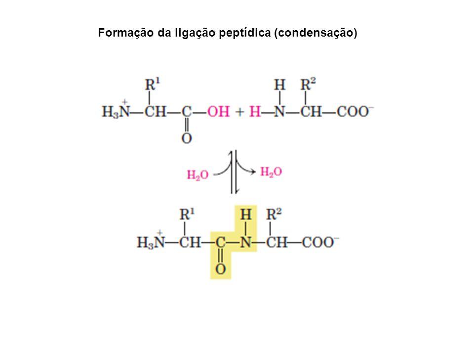 Formação da ligação peptídica (condensação)