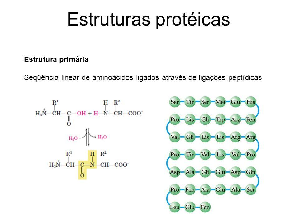 Estruturas protéicas Estrutura primária Seqüência linear de aminoácidos ligados através de ligações peptídicas