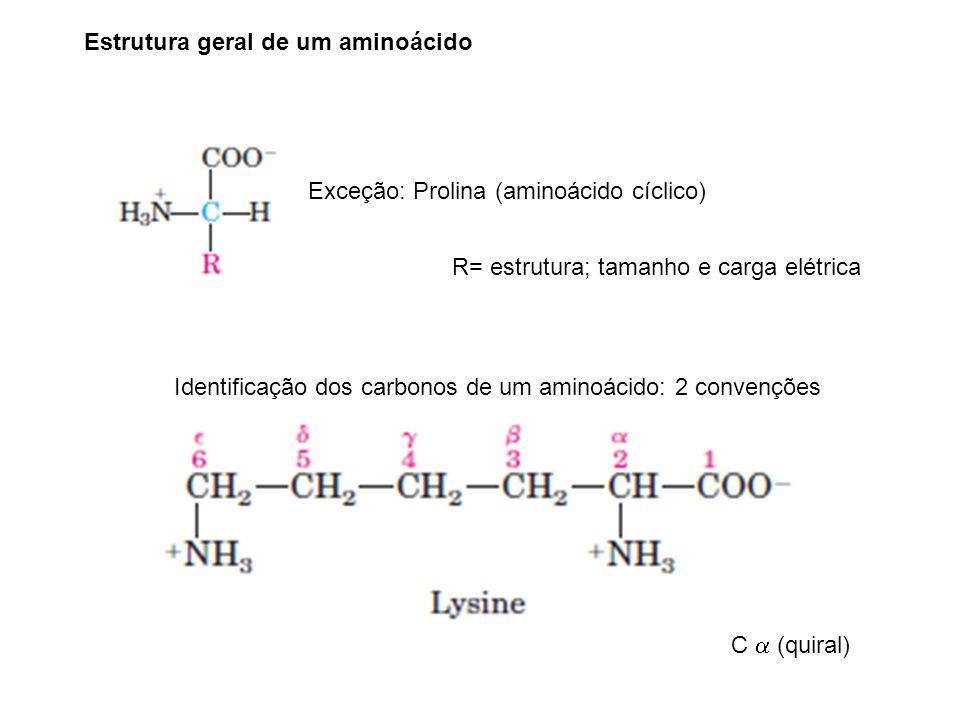 Estrutura geral de um aminoácido Exceção: Prolina (aminoácido cíclico) Identificação dos carbonos de um aminoácido: 2 convenções C (quiral) R= estrutura; tamanho e carga elétrica