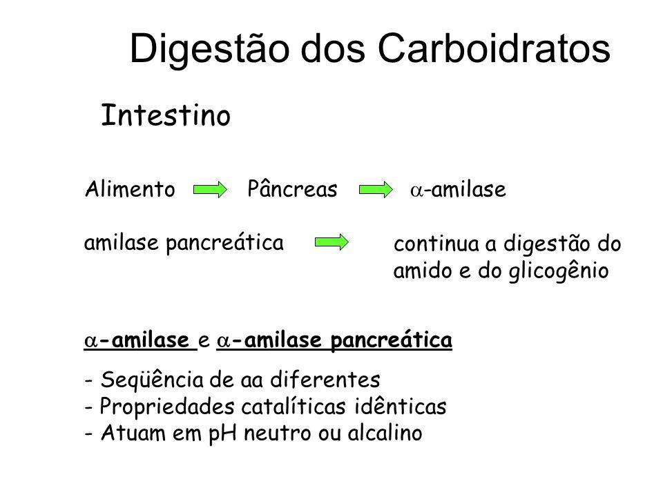 Digestão dos Carboidratos Intestino Alimento Pâncreas -amilase amilase pancreática -amilase e -amilase pancreática - Seqüência de aa diferentes - Prop