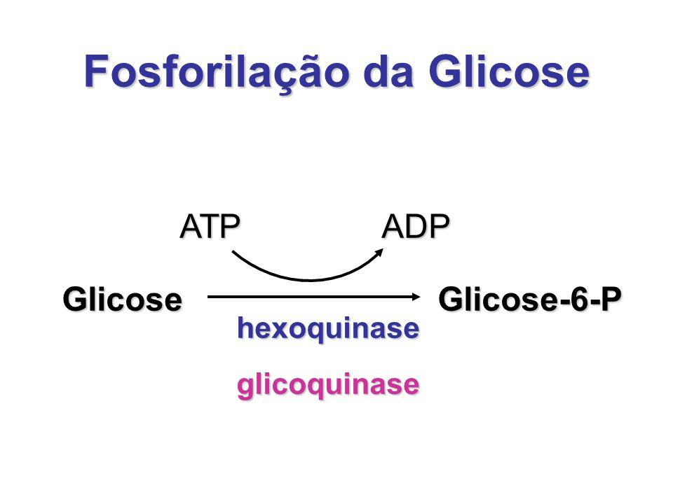 Fosforilação da Glicose Glicose ATP hexoquinase glicoquinase ADP Glicose-6-P