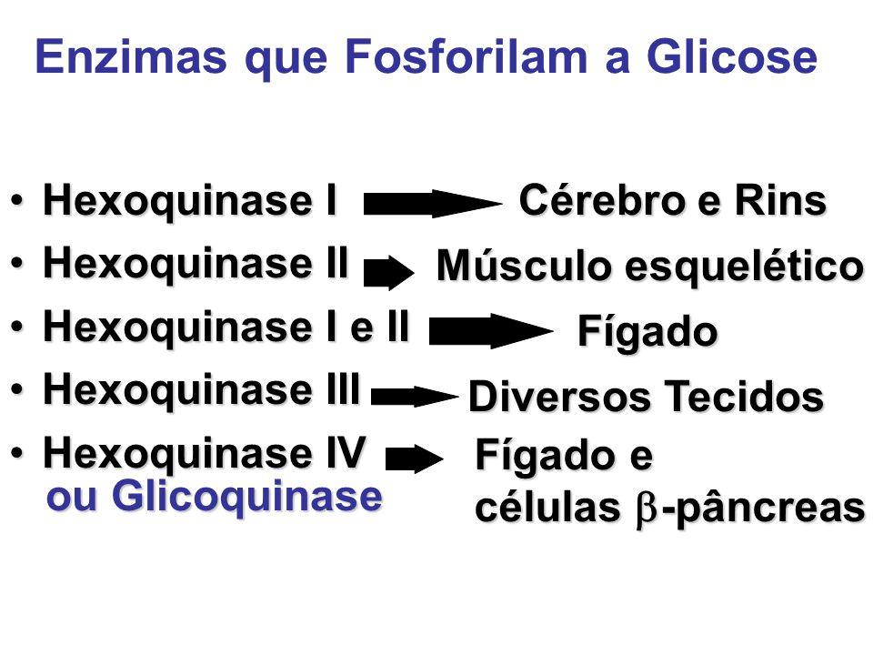 Enzimas que Fosforilam a Glicose Hexoquinase IHexoquinase I Hexoquinase IIHexoquinase II Hexoquinase I e IIHexoquinase I e II Hexoquinase IIIHexoquina