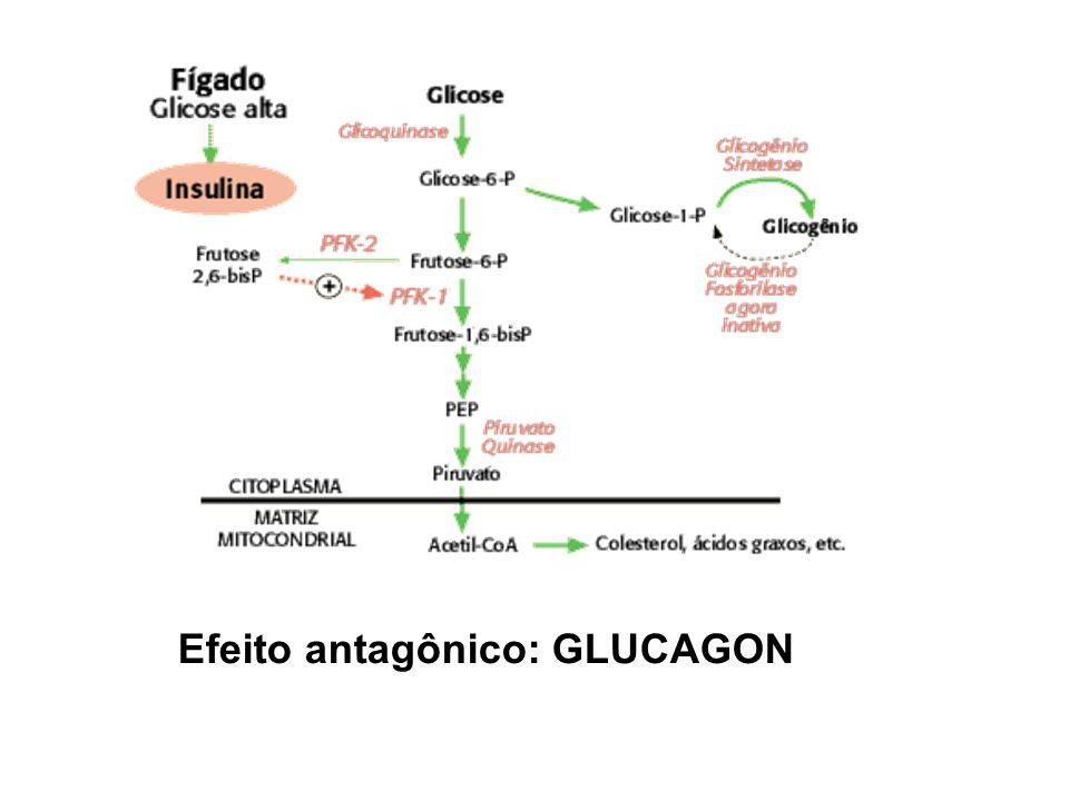 Efeito antagônico: GLUCAGON