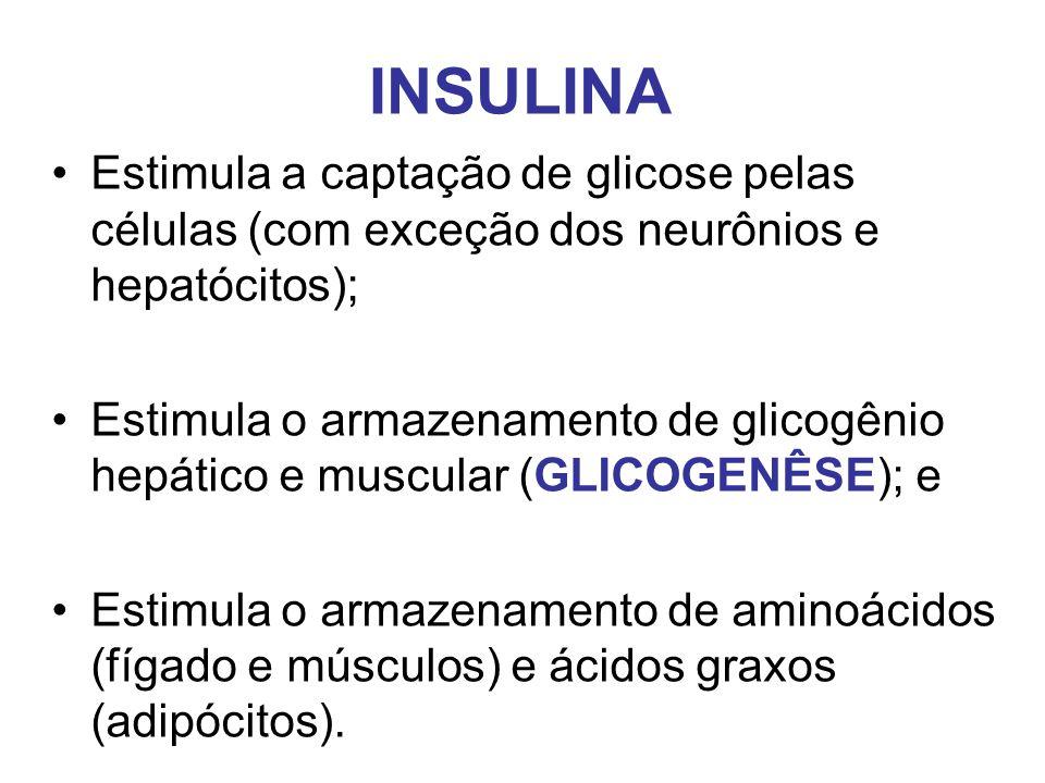 INSULINA Estimula a captação de glicose pelas células (com exceção dos neurônios e hepatócitos); Estimula o armazenamento de glicogênio hepático e mus