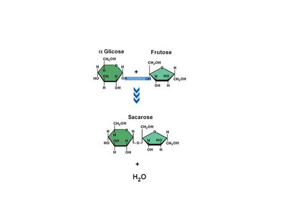 2. Classificação quanto número de moléculas Polissacarídios