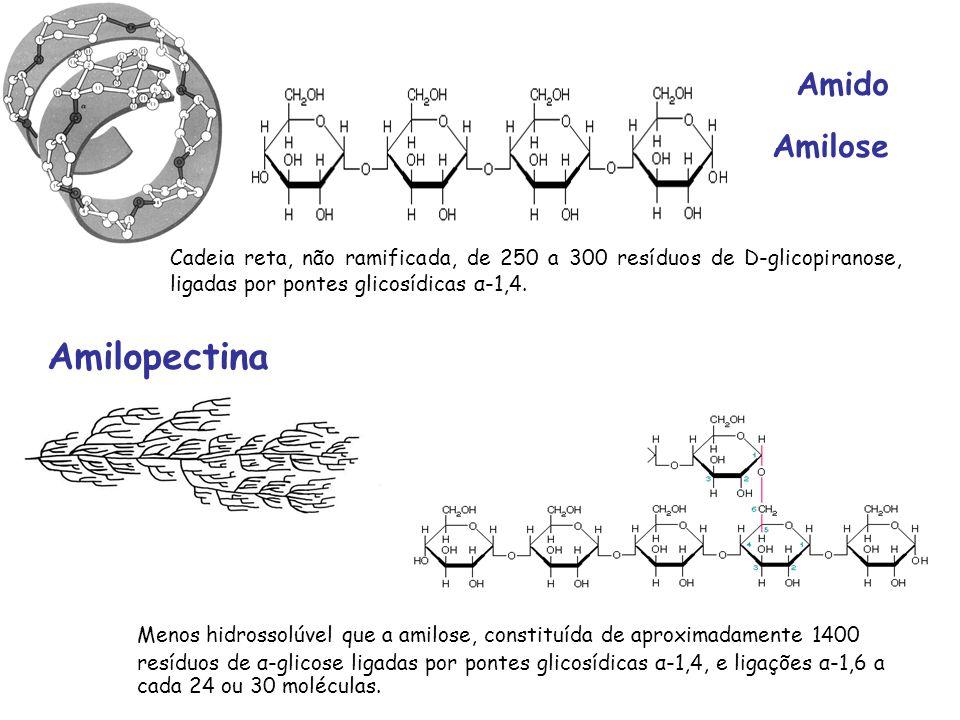 Amido Amilose Amilopectina Cadeia reta, não ramificada, de 250 a 300 resíduos de D-glicopiranose, ligadas por pontes glicosídicas α-1,4. Menos hidross