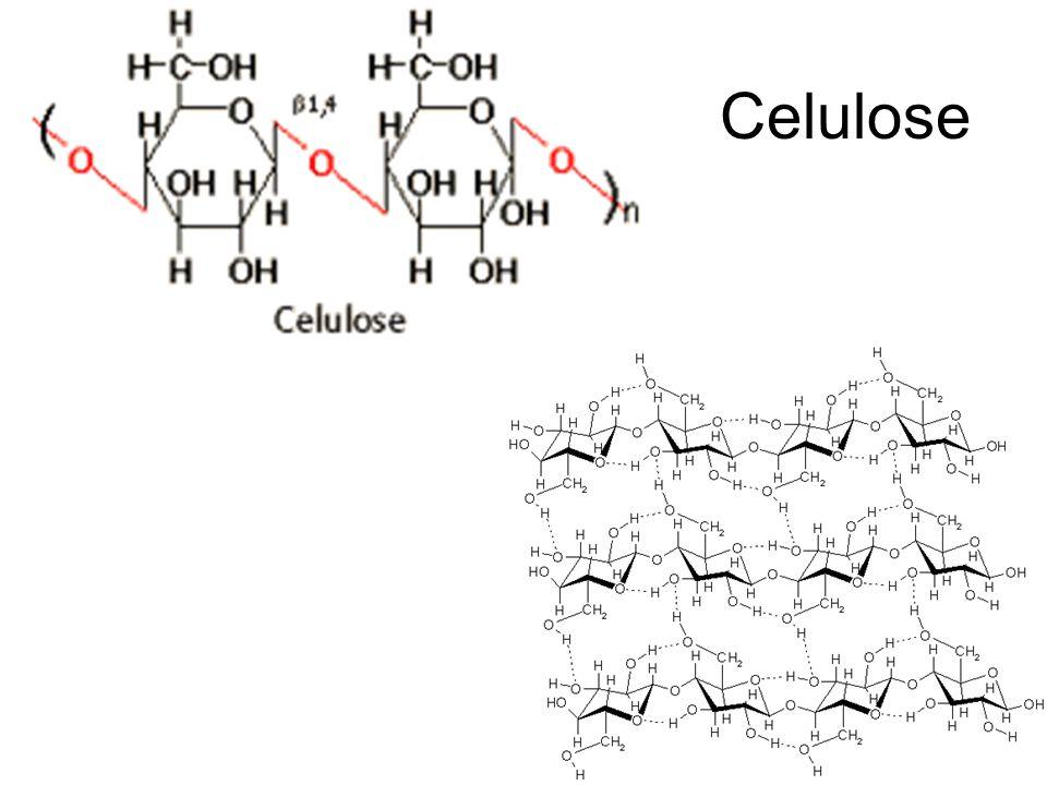 Distribuição do glicogênio Glicogênio Hepático 4,0 %72 g Glicogênio Muscular 0,7 %245 g Glicose extracelular 0,1 %10 g TOTAL-327 g Peso RelativoMassa Total