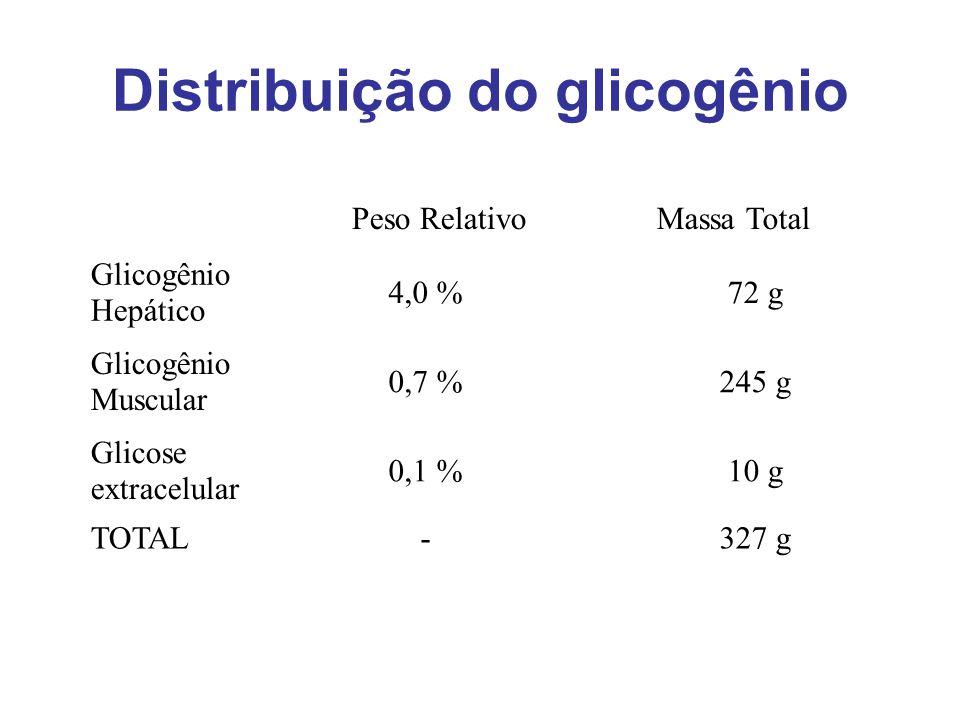 Distribuição do glicogênio Glicogênio Hepático 4,0 %72 g Glicogênio Muscular 0,7 %245 g Glicose extracelular 0,1 %10 g TOTAL-327 g Peso RelativoMassa
