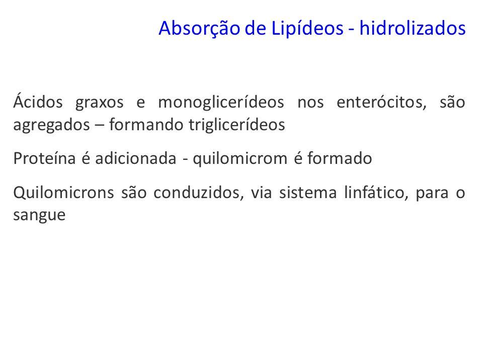 Absorção de Lipídeos - hidrolizados Ácidos graxos e monoglicerídeos nos enterócitos, são agregados – formando triglicerídeos Proteína é adicionada - q