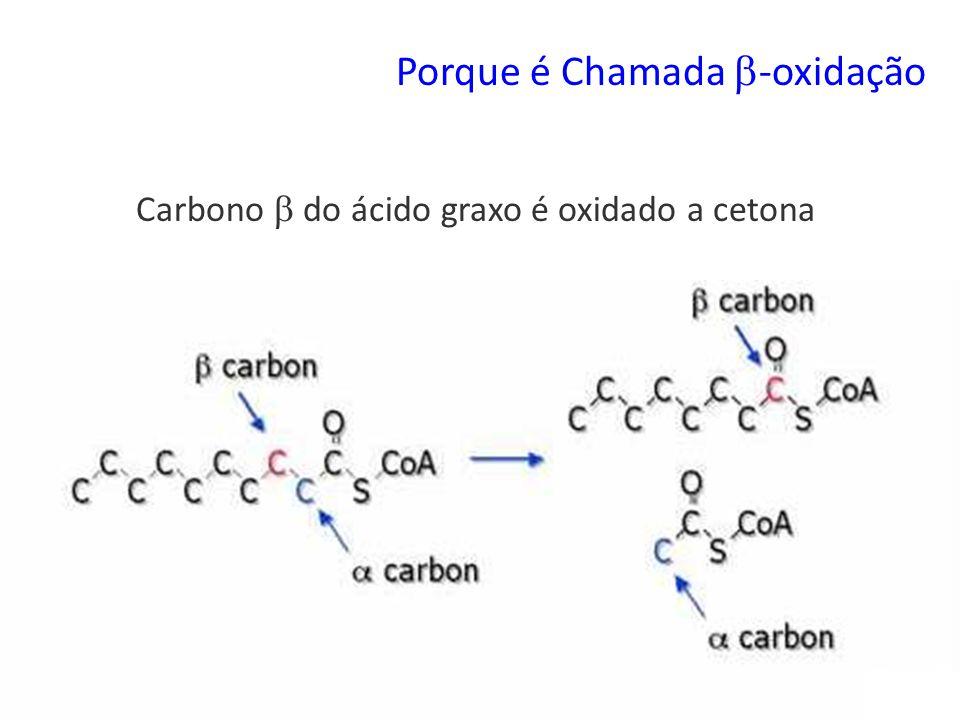 Porque é Chamada -oxidação Carbono do ácido graxo é oxidado a cetona
