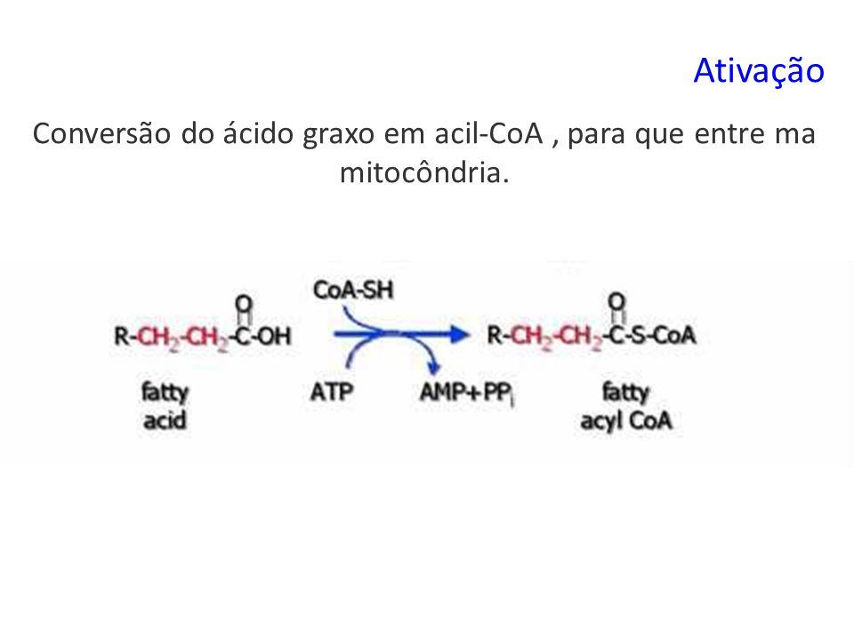 Ativação Conversão do ácido graxo em acil-CoA, para que entre ma mitocôndria.