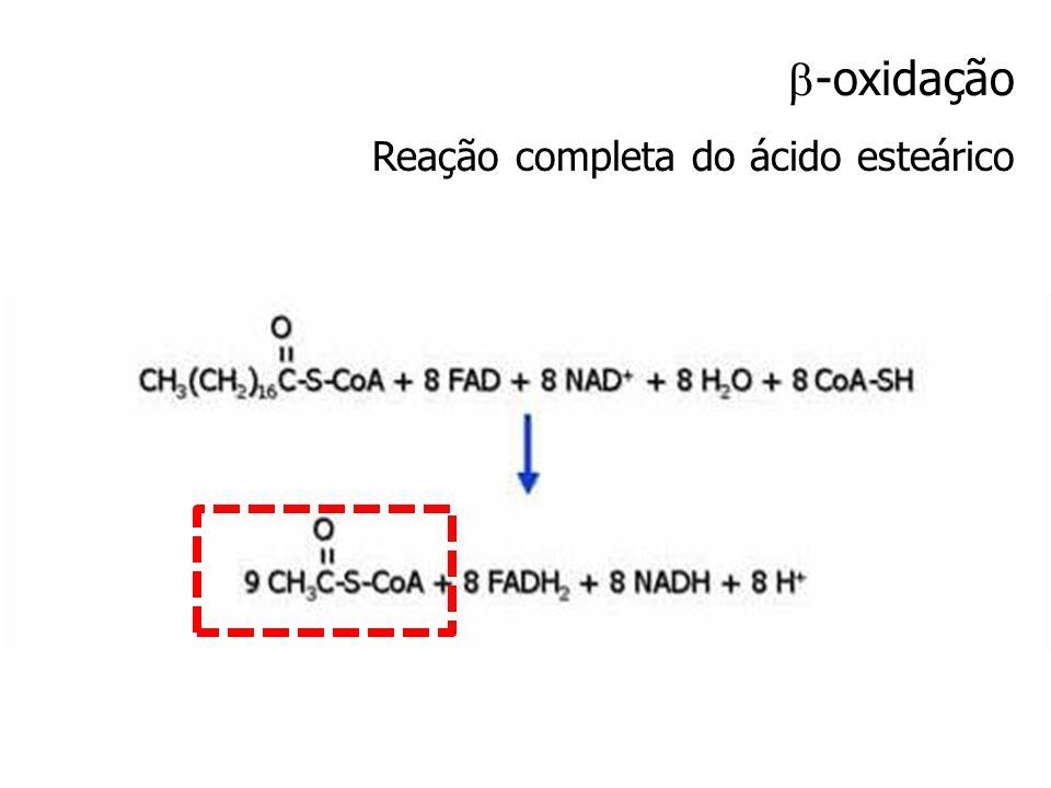 -oxidação Reação completa do ácido esteárico