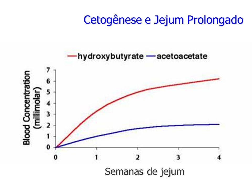 Cetogênese e Jejum Prolongado Semanas de jejum
