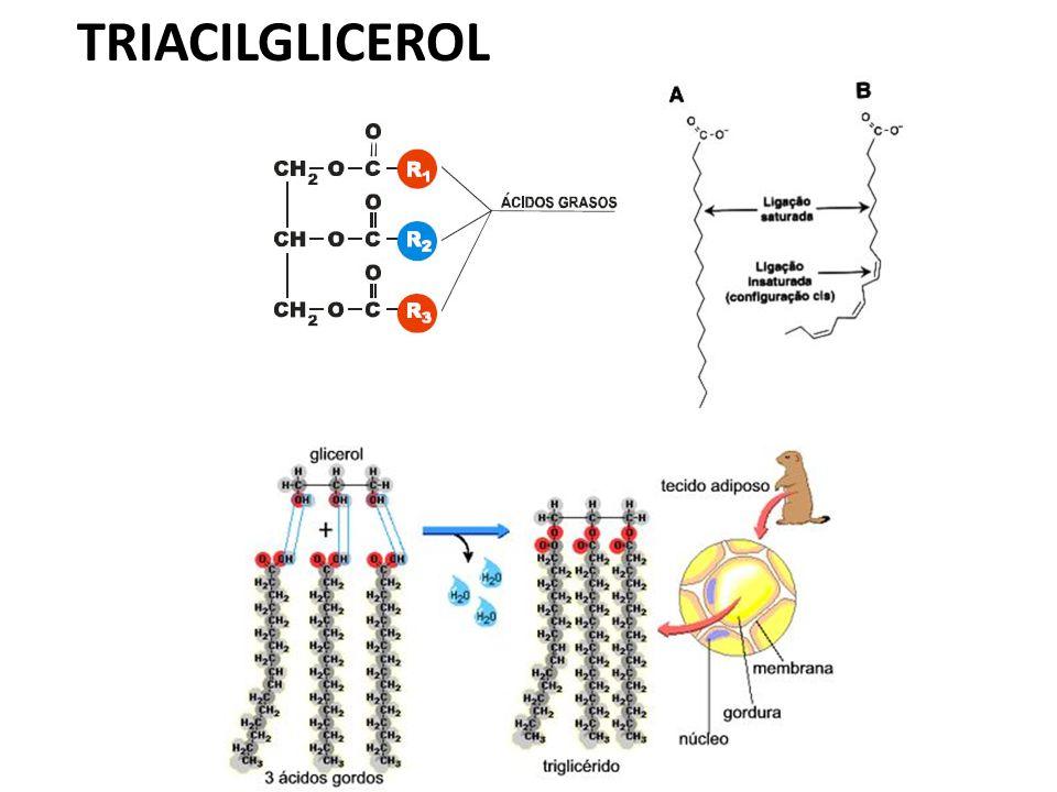 Corpos Cetônicos Se muita Acetil-CoA é produzida pela -oxidação, o excesso é convertido em corpos cetônicos