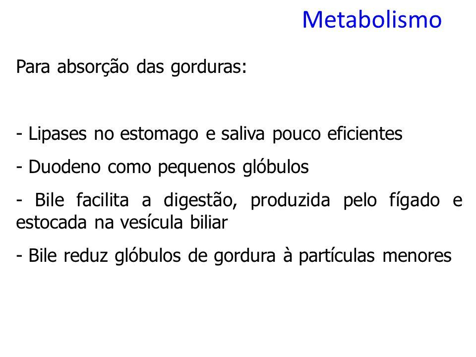 Metabolismo Para absorção das gorduras: - Lipases no estomago e saliva pouco eficientes - Duodeno como pequenos glóbulos - Bile facilita a digestão, produzida pelo fígado e estocada na vesícula biliar - Bile reduz glóbulos de gordura à partículas menores