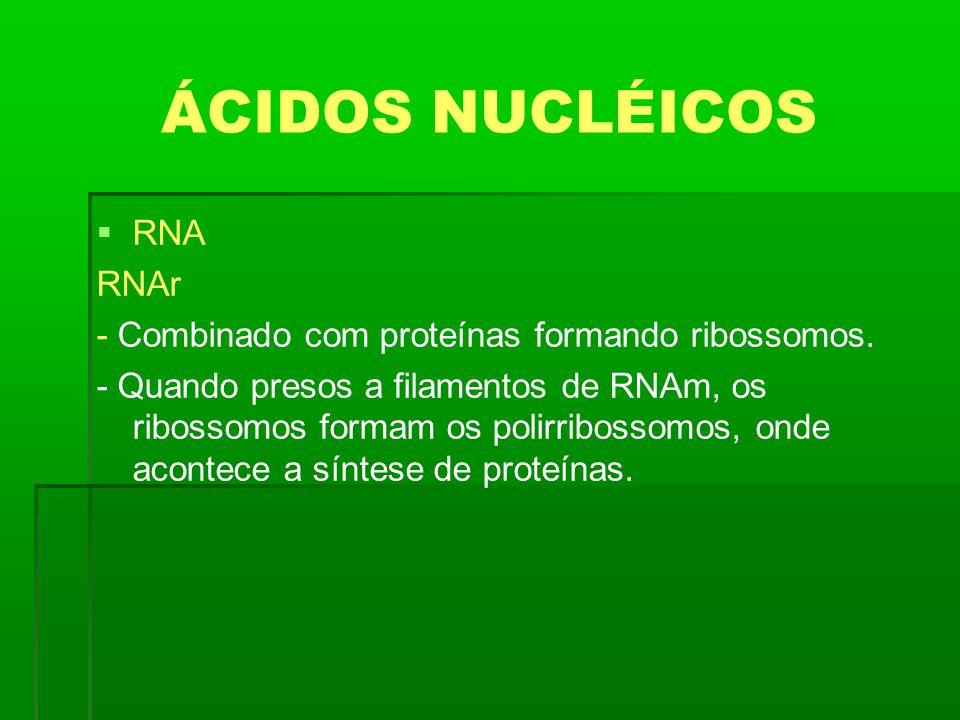 ÁCIDOS NUCLÉICOS RNA RNAr - Combinado com proteínas formando ribossomos. - Quando presos a filamentos de RNAm, os ribossomos formam os polirribossomos