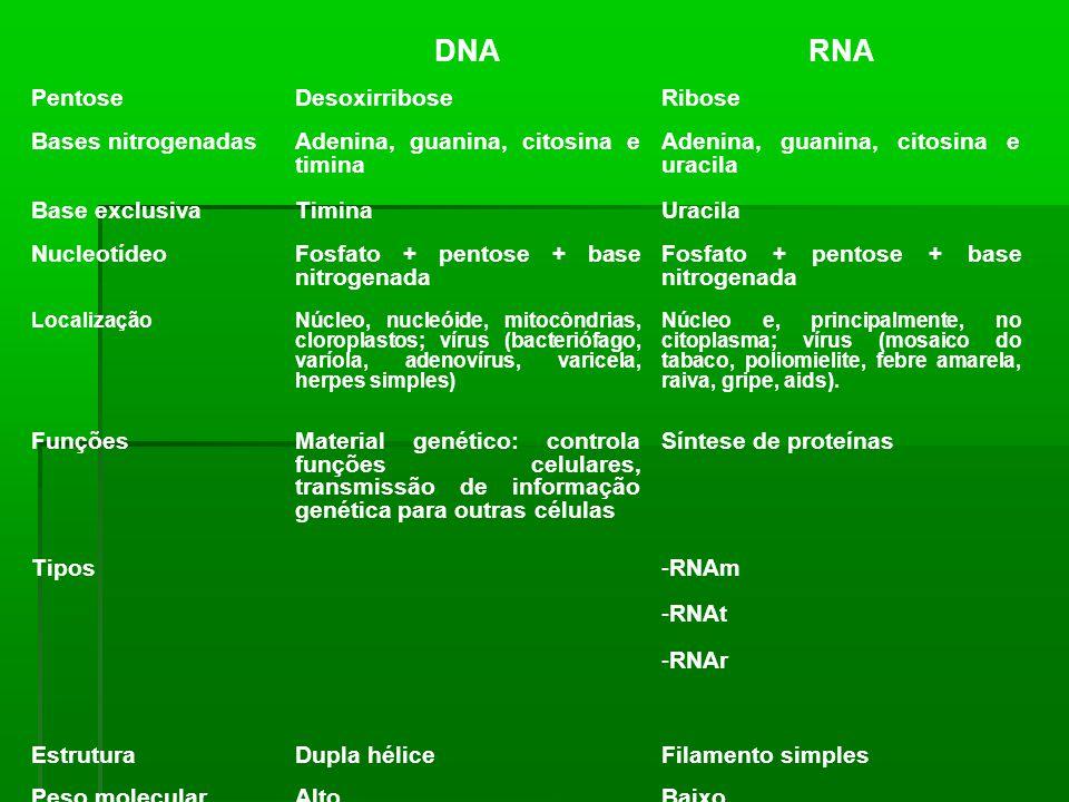 DNARNA PentoseDesoxirriboseRibose Bases nitrogenadasAdenina, guanina, citosina e timina Adenina, guanina, citosina e uracila Base exclusivaTiminaUraci