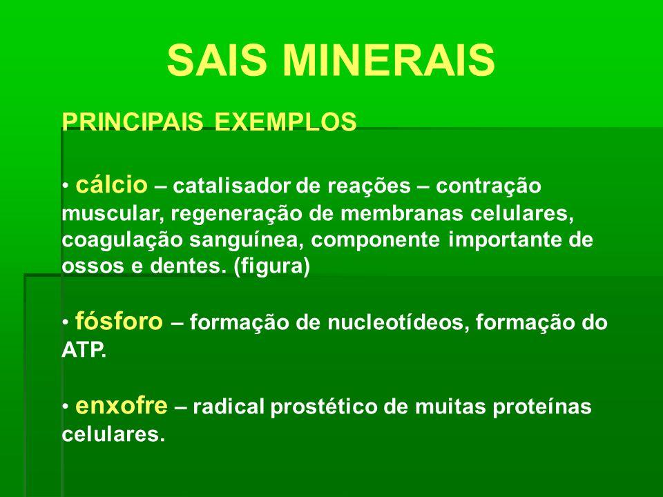 SAIS MINERAIS PRINCIPAIS EXEMPLOS cálcio – catalisador de reações – contração muscular, regeneração de membranas celulares, coagulação sanguínea, comp