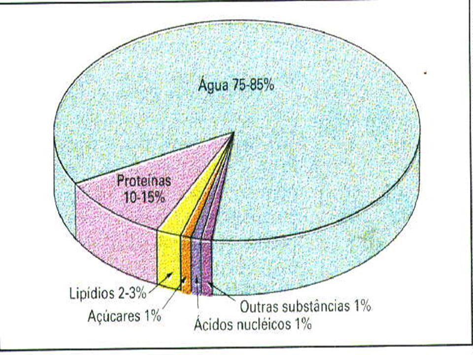 ÁCIDOS NUCLÉICOS RNA Origem: um modelo de DNA.Função: síntese protéica.