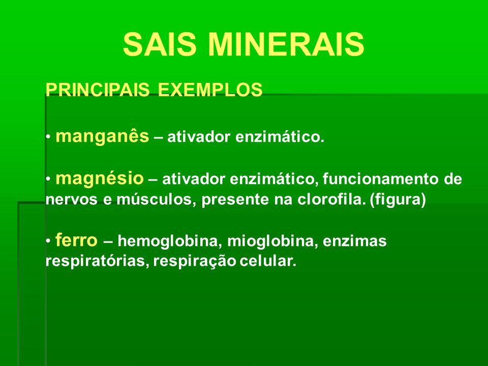 SAIS MINERAIS PRINCIPAIS EXEMPLOS manganês – ativador enzimático. magnésio – ativador enzimático, funcionamento de nervos e músculos, presente na clor