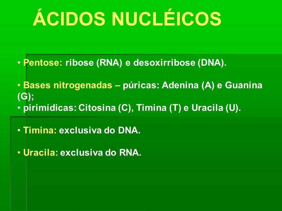 ÁCIDOS NUCLÉICOS Pentose: ribose (RNA) e desoxirribose (DNA). Bases nitrogenadas – púricas: Adenina (A) e Guanina (G); pirimídicas: Citosina (C), Timi