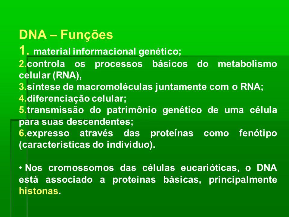DNA – Funções 1. material informacional genético; 2.controla os processos básicos do metabolismo celular (RNA), 3.síntese de macromoléculas juntamente